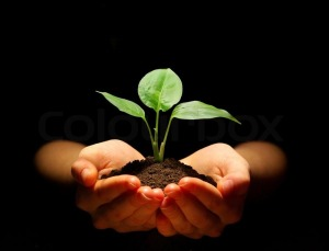 3841828-plant-in-hands